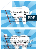 (2) Tooth Identification