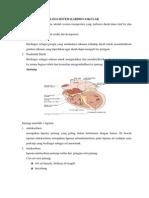 Gambaran Histologi Sistem Kardiovaskular
