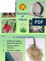 6-Plant Structure Adaptations and Responses
