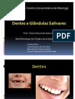 Dentes e Glandulas Salivares Slides Oficial-1