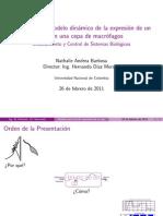 Diseño de un modelo dinámico de la expresión de un gen