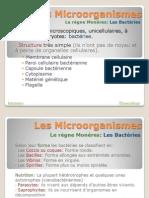 Microorganismes