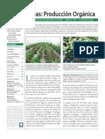 Cultivo de Fresas Organicas