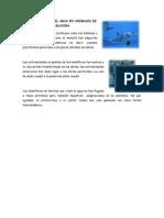 Adaptaciones en El Agua en Animales de La Guajira