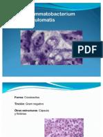 calymmatobacterium granulomatis