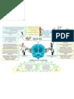 Neuropsicologia Mapa Mental