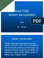 Anatomi Sistem Persyarafan