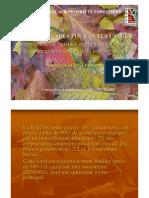 La Forêt Bretonne -Quelles essences pour quels usages