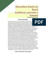 Bubalinocultura Leiteira No Brasil