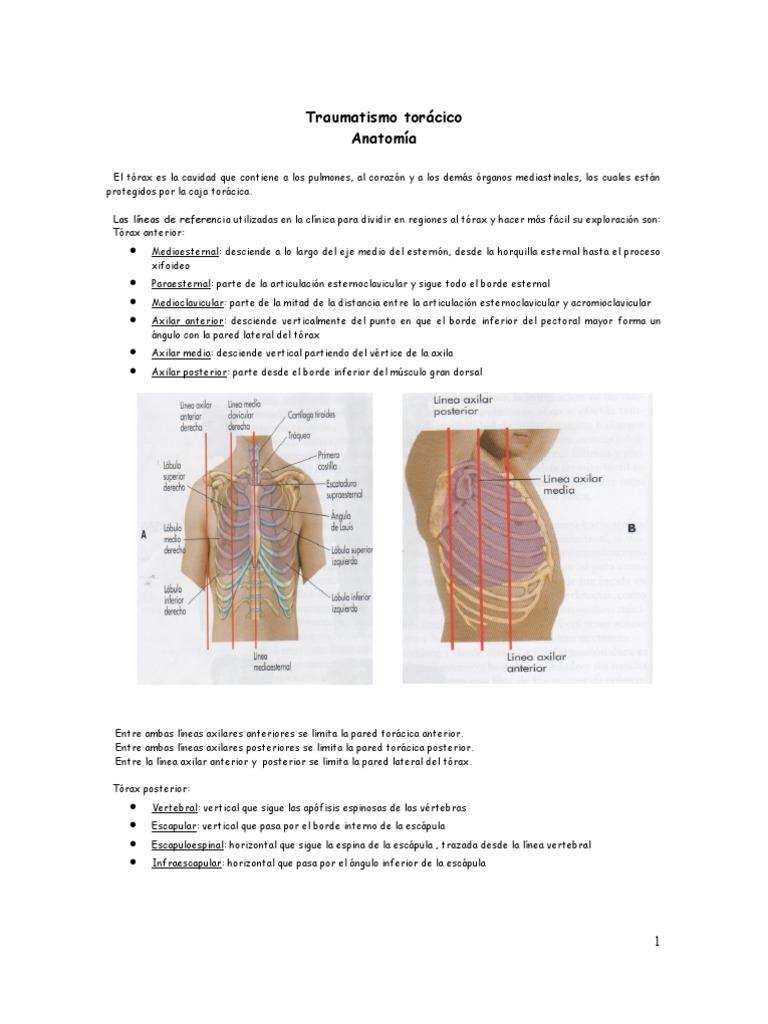 Perfecto Inferiores órganos Anatomía Back Componente - Imágenes de ...