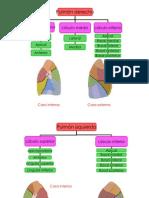 lobulos pulmonares