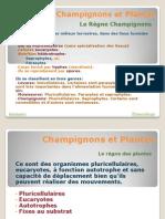 Champignons Et Plantes