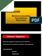 Integración Membrana, Permeabilidad y  Mitocondria (campus)