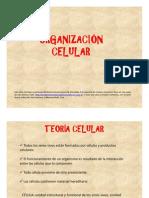 3-Organizacion Celular y Virus Modo de ad