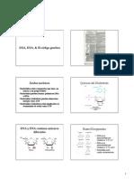 DNA, RNA, & El código genético