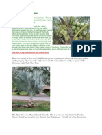 Types of Coconut Trees