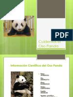 Cuidemos El Oso Panda1