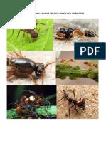 Son Las Hormigas Similares en Todos Los Ambientes