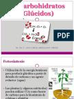 5_Carbohidratos