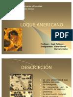 Loque Americano 2002 (1)