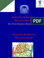 Anatomia Macro Microcirculacion Steph Torres Pastrana 2010