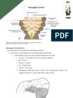Anatomy Faryngeal Artses!