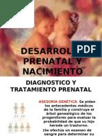 Desarrollo Prenatal y Nacimiento