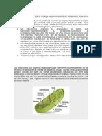 Mitocondria y Genesis de Jabcob