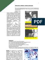Apunte TBC Urogenital