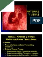 Arterias y Venas Embriologia II