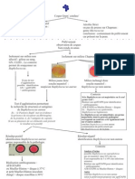 Staphylococcus Orientation[1]