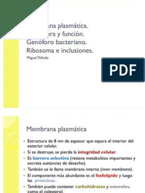 Membrana Plasmática En Bacterias Membrana Celular Las