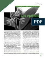 epifitas