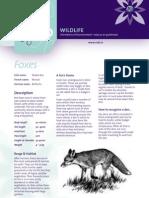 Foxes Factsheet