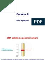5Genoma II DNArepetitivo