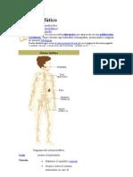 glandulas linfaticas