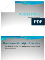 Muscle Tissue 2011 28-7-11