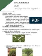 las plantas.tema 3º primaria