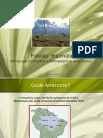 Amazzonia-foresta_macinata