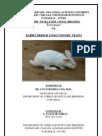 Breeds Rabbit