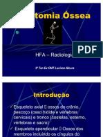 anatomia  ossea
