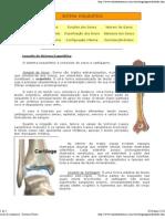 Aula de Anatomia - Sistema Ósseo