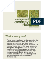 Management of Weedy Rice