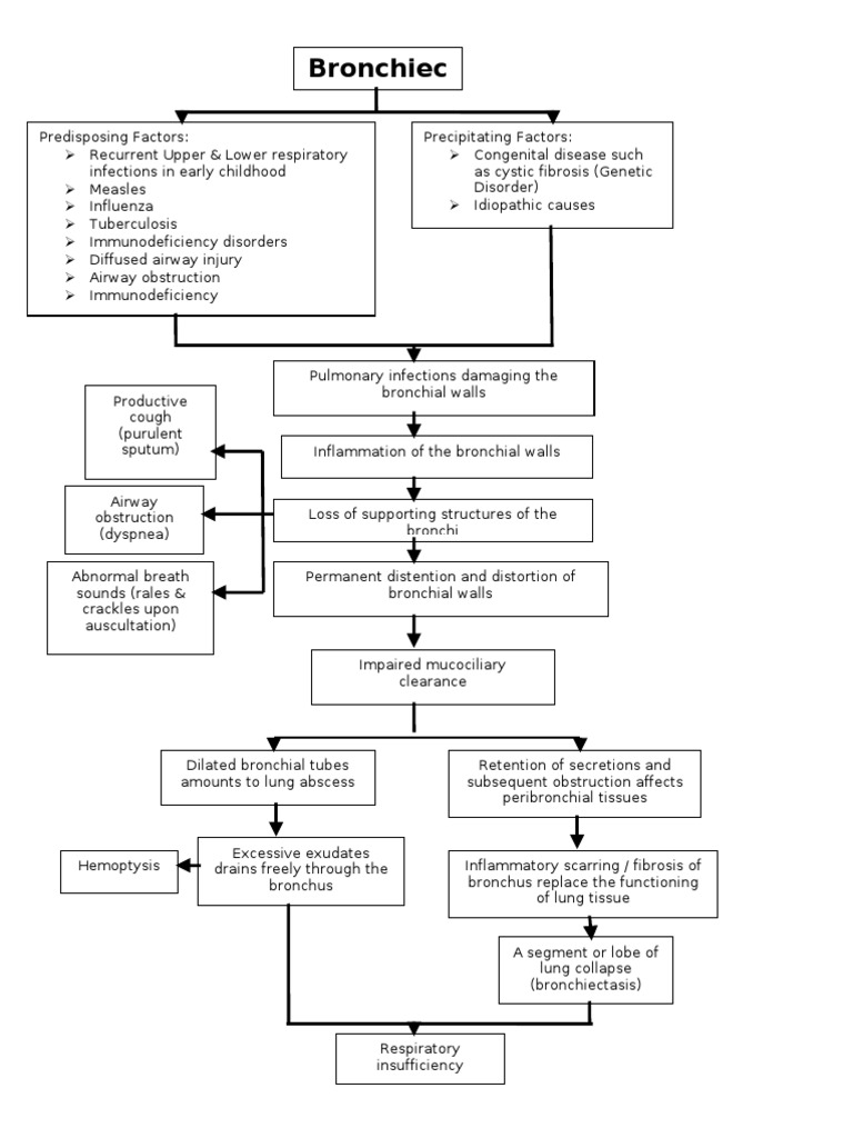 Bronchiectasis Pathophysiology Respiratory Tract Lung