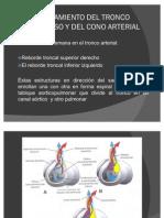 sistemacardiovascular1