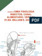 anatomía y fisiología de los insectos