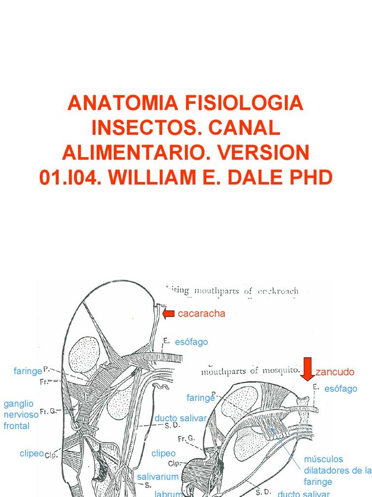 Contemporáneo Anatomía Y Fisiología Mhhe Embellecimiento - Imágenes ...