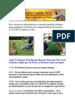 como educar a un perro cachorro - como educar a un perro - manual adiestramiento canino