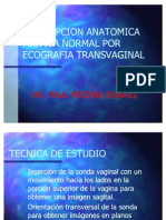 Descripcion de La Anatomia Pelvica Normal Por Ecografia Tran[1]