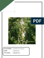 herbier dycotylodone